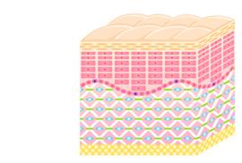 step33 | コラーゲン構造がリフトアップ、肌を改善します